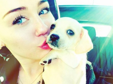 xmiley-cyrus-pet-dog.jpg.pagespeed.ic.1BI6H5wNX-