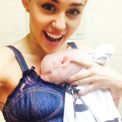 miley-cyrus-pig-instagram-1407744429-custom-0